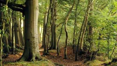 la Foresta di Etica Sgr