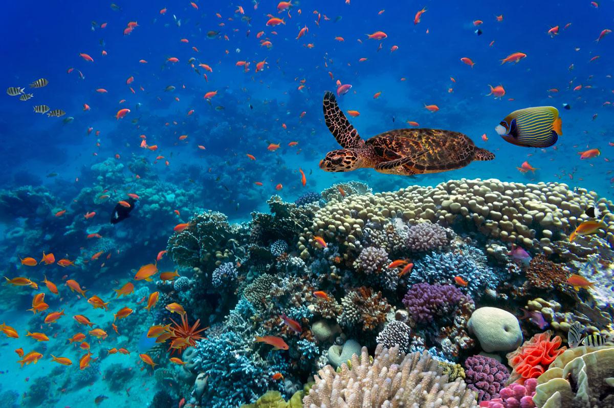 Biodiversità in mare - Giornata mondiale della Natura