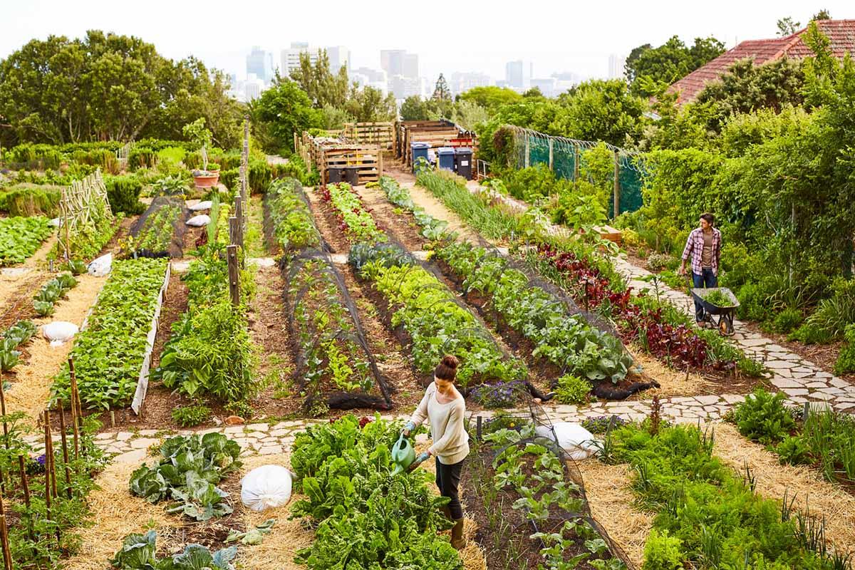 tassonomia verde ue - giardino urbano, orto urbano
